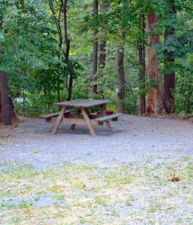 Private Wooded Campsites